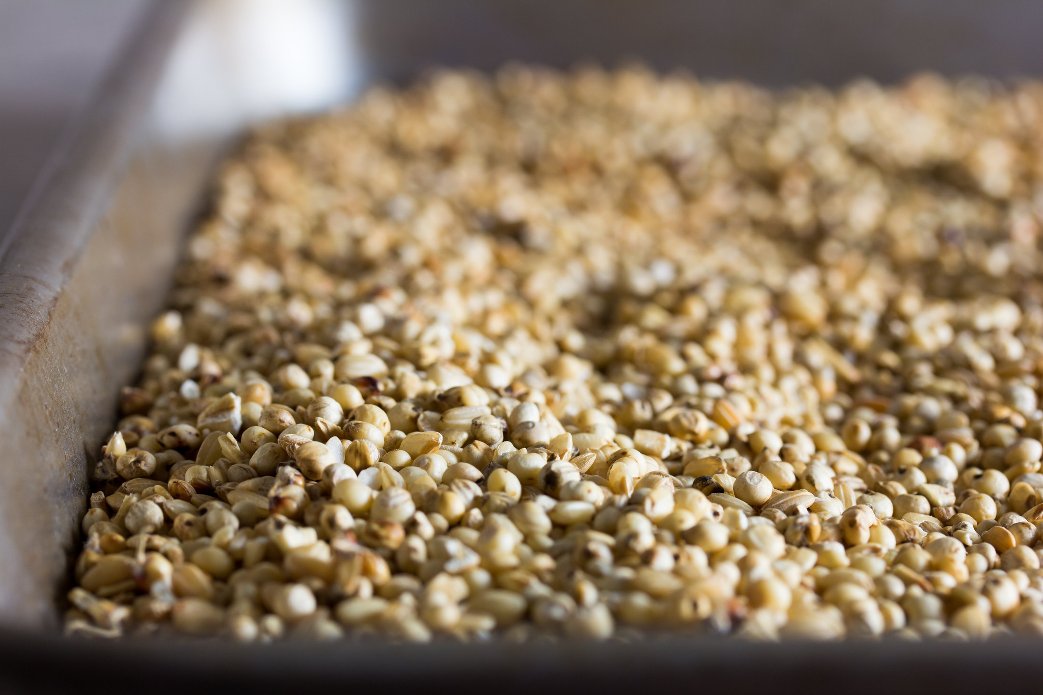 Gluten-free beer grains - Sorghum, Brown Rice, Oats, Toasted