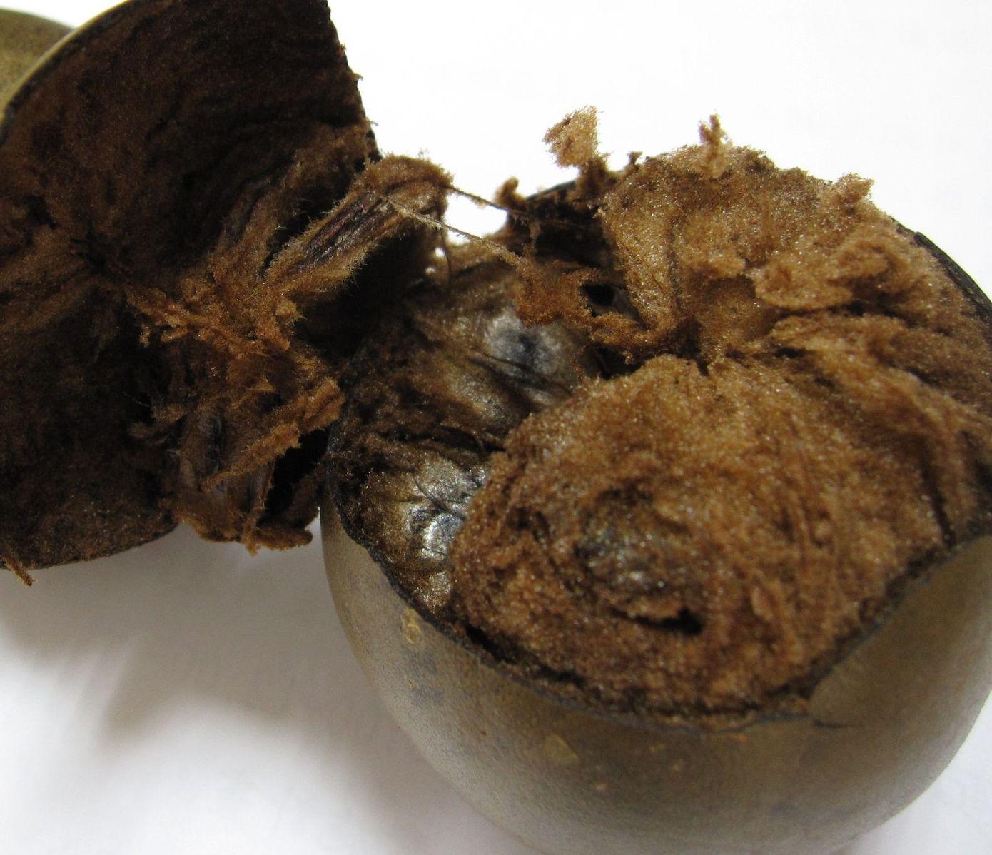 1390px-Dried_Siraitia_grosvenorii_(luohanguo)_fruit_(opened)