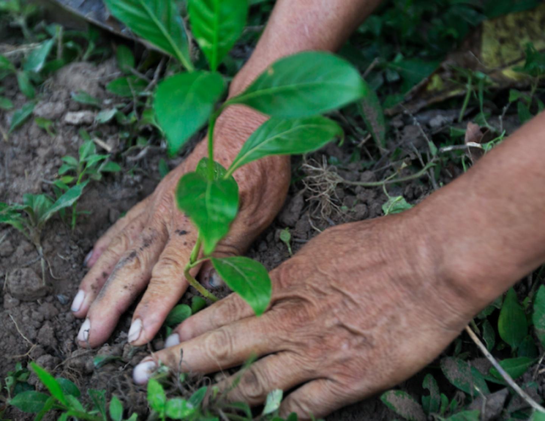 Planting-Tree-PUR-Projet-1-640x642_1024x1024